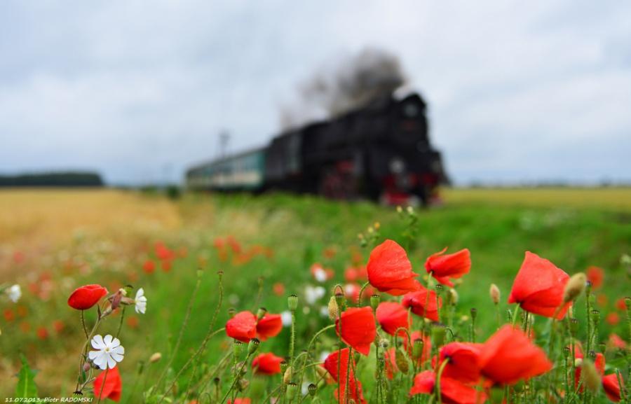 Grodzisk Wlkp. (Młyniewo Nowotomyskie - przystanek nieczynny), pociąg osobowy Poznań Gł. - Wolsztyn